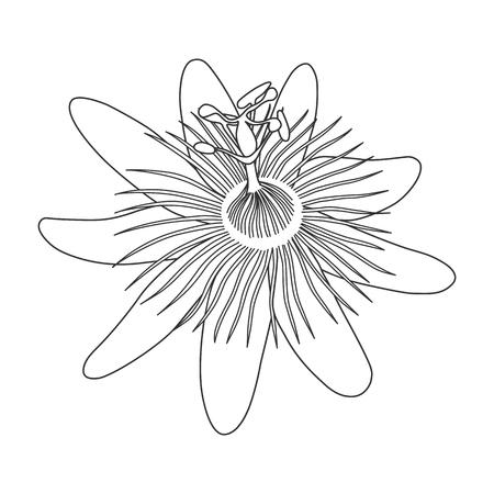 Dessin dessiné à la main, fleur noire monochrome, passioniflora sur fond blanc. Impression des lignes de courbes. Page du livre à colorier