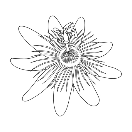 Isolated hand drawn black outline monochrome flower of passionflower,passiflora on white background. Print of curve lines. Page of coloring book Illustration