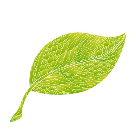 Isolated hand drawn outline coloured ornate green yellow leaf on white background. Ornament of curve lines