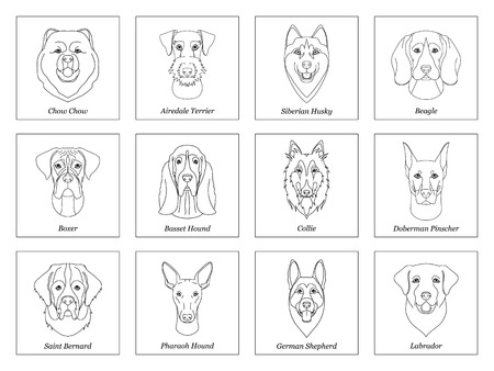 Collection of isolated black outline head of airedale terrier, chow, husky, pharaoh hound, saint bernard, labrador, collie, doberman, boxer on white background. Line cartoon breed dog portrait Illustration