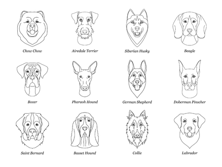 set, collection of isolated black outline head of airedale terrier, chow, husky, pharaoh hound, saint bernard, labrador, collie, doberman, boxer on white background. Line cartoon breed dog portrait