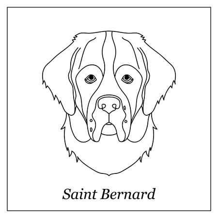 Saint Bernard Stock Photos And Images