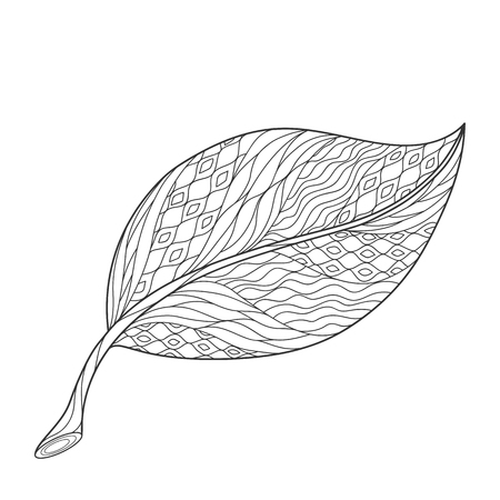 Isolated hand drawn black outline monochrome ornate leaf on white background. Ornament of curve lines