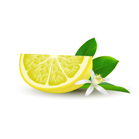 Isolated realistic colored slice of juicy yellow lemon with green leaf, white flower and shadow on white background