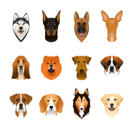 Set, collection of isolated colorful head and face of airedale terrier, beagle, chow, husky, pharaoh hound, saint bernard, labrador, collie, doberman, boxer. Color flat cartoon breed dog portrait
