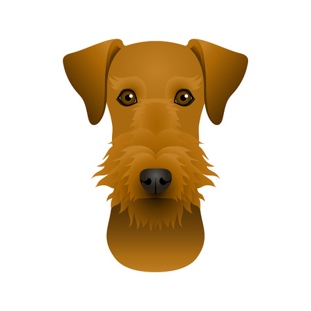 Isolated colorful head and face of airedale terrier on white background. Color flat cartoon breed dog portrait