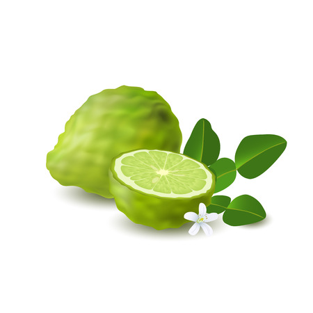 Isolated colored green whole and half of juicy bergamot, kaffir lime with green leaves, white flower and shadow on white background. Realistic citrus fruit