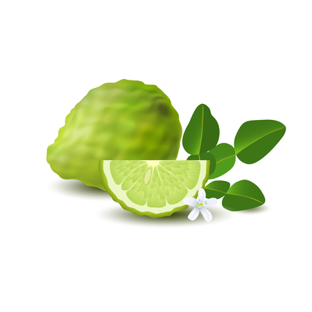 Isolated colored green whole and slice of juicy bergamot, kaffir lime with green leaves, white flower and shadow on white background. Realistic citrus fruit Illustration