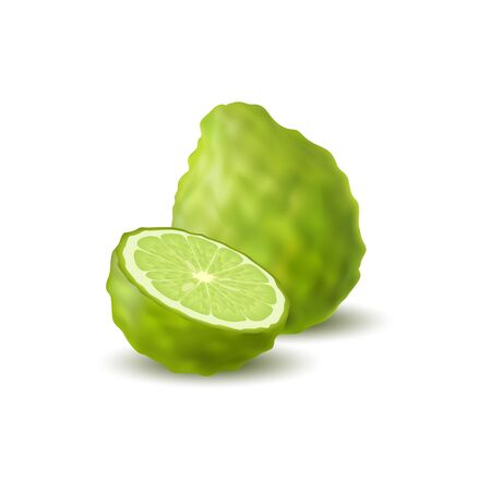 Isolated colored green whole and half of juicy bergamot, kaffir lime with shadow on white background. Realistic citrus fruit Illustration