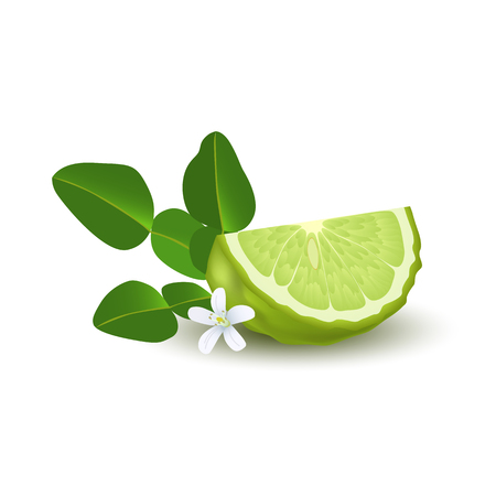 Lime with green leaves image illustration