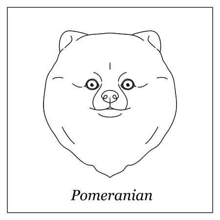 Isolated black outline head of pomeranian, german spitz on white background. Line cartoon breed dog portrait Vettoriali