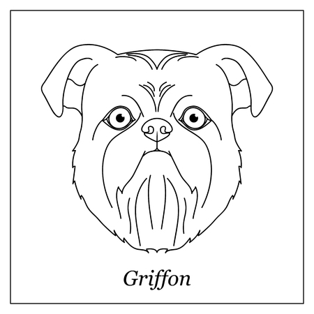 Isolated black outline head of Brussels, Belgian griffon on white background. Line cartoon breed dog portrait. 向量圖像