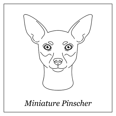 Isolated black outline head of Miniature Pinscher on white background. Line cartoon breed dog portrait