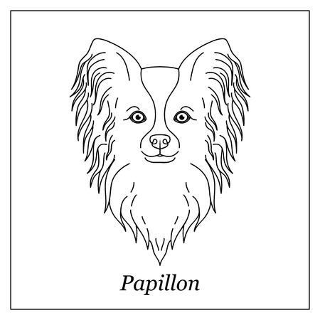 Isolated black outline head of papillon on white background. Line cartoon breed dog portrait