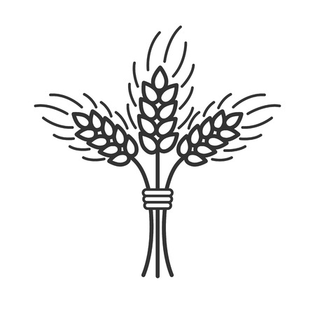 Black isolated outline icon of sheaf of wheat on white background. Line Icon of sheaf of wheat