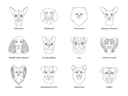 Collection of isolated black outline head of chihuahua dachshund, Papillon, spitz, pug, miniature pinscher welsh corgi french bulldog griffon on white background.