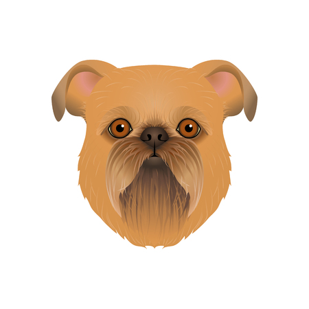 Isolated colorful head and face of brussels, belgian griffon on white background. Color flat cartoon breed dog portrait