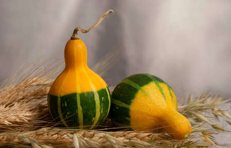 Pumpkins, melons in by a large plan with the ears of wheat Stock Photo