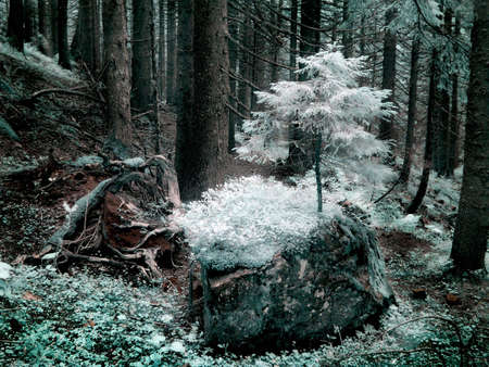 A forest  is in an infra-red color, shoot special photocamera