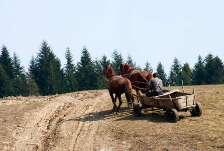 olden: Wagon with horses. rural stage. Ukraine. Carpathians.