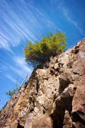 be single tree on a rock. Ukraine, Carpathians