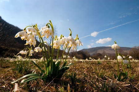 landscape with flowers in a sun day. Ukraine, Carpathians.
