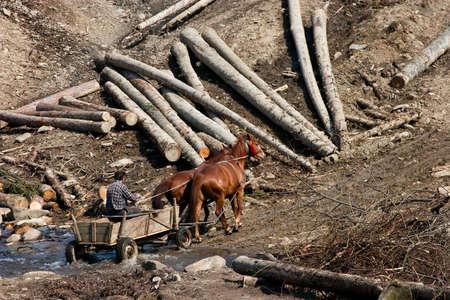 Wagon with horses. rural stage. Ukraine. Carpathians.