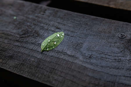 green leaf on a background of wet wooden boards. texture Imagens