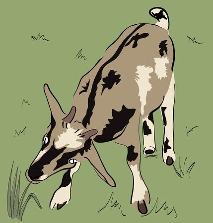Yeanling on isolated background Illustration