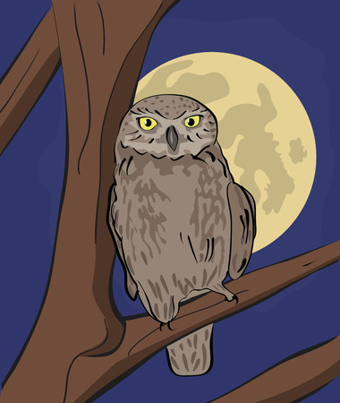 Owl sitting on tree branch at night