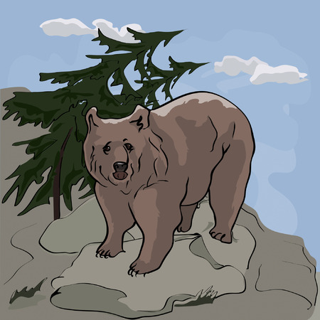 Bear stands on the rock