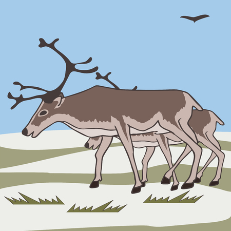 pair reindeers at tundra background, vector cartoon illustration of caribou Illustration