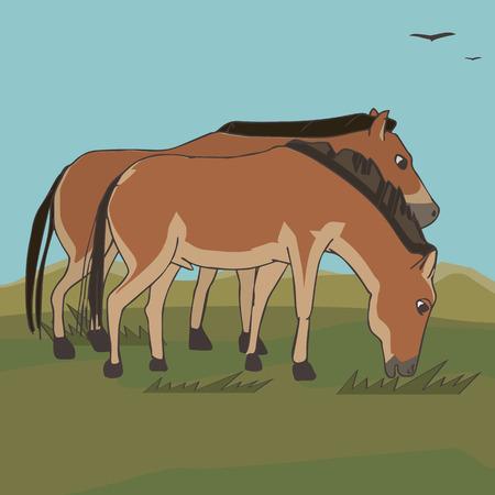 pair of wild horses at veld background, vector cartoon illustration