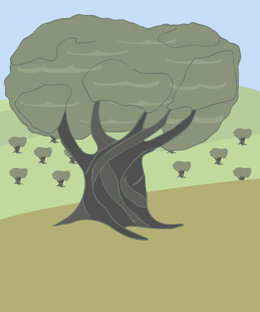cartoon landscape with olive tree, vector illustrating olive tree on background of hills and olive grove