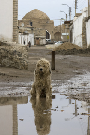 A stray dog sitting in a muddy puddle.