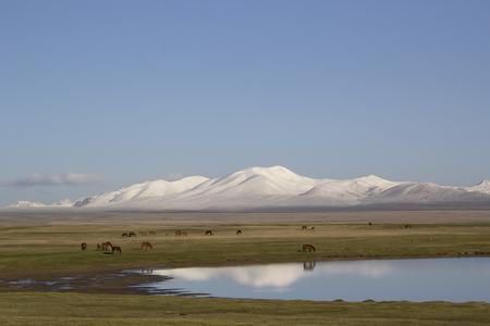 Lake Son-Kul, Kyrgyzstan. Horses grazing.