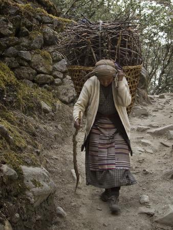 sherpa: SAGARMATHA, NEPAL - NOVEMBER 16: Sherpa woman carries a load. Himalayas, Sagarmatha National Park. Nepal.. November 16, 2014 in Nepal, Sagarmatha.