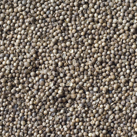coriander seeds: Coriander seeds, spice Stock Photo