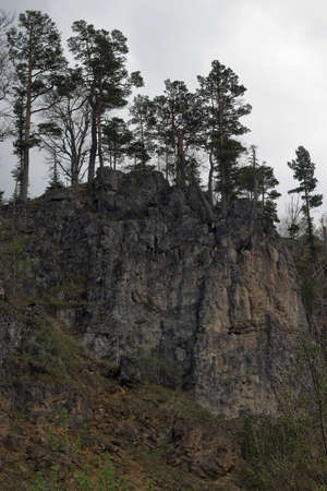 dreary: Pines grow on the rocks Stock Photo