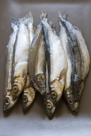 tatty: Raw fish capelin
