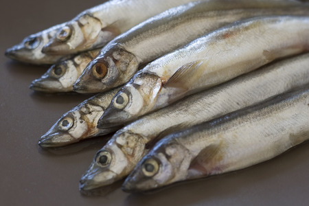 pauper: Raw fish capelin