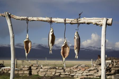 whitefish: Dried salted whitefish outdoors. Lake IssykKul Kyrgyzstan.