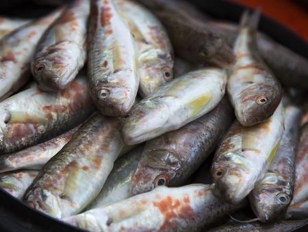 manjar: El pescado crudo, salmonete - delicadeza de Crimea.