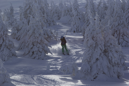 non moving activity: Skier rides among the pine trees.