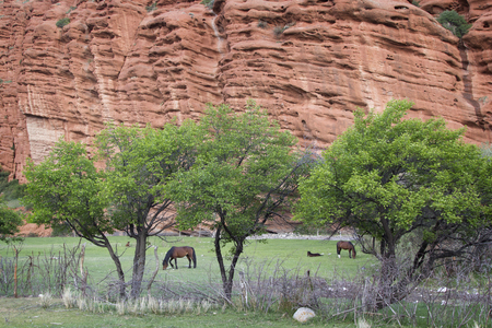 kirgizia: Horses grazing, red rocks in Djety Oguz, Kyrgyzstan.