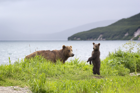 Bear and little bear on lake.