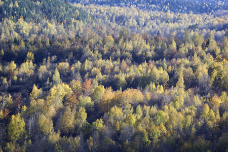 The beginning of autumn - colored trees Reklamní fotografie