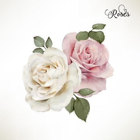 vintage: Bukiet róż, akwarela, mogą być używane jako karty z pozdrowieniami, karty z zaproszeniem do ślubu, urodziny i inne wakacje i letnie tle. Wektor.