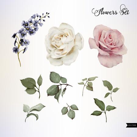rosas blancas: Flores y hojas, acuarela, se puede utilizar como tarjeta de felicitaci�n, tarjeta de invitaci�n para la boda, cumplea�os y otras fiestas y el verano de fondo. Ilustraci�n del vector.