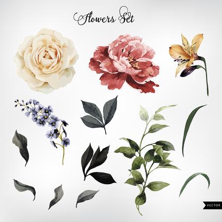 葡萄收穫期: 花和葉,水彩畫,可以作為賀卡,請柬婚禮,生日等節日夏季背景。矢量插圖。